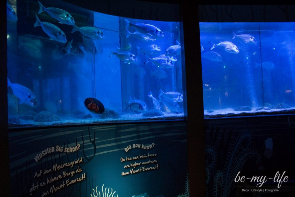 sea-life-berlin-helden-der-meere-aquarien