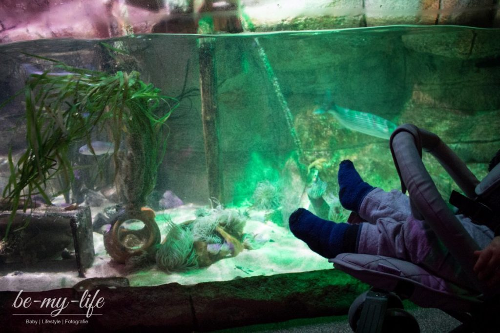 sea-life-berlin-helden-der-meere-bodentiefe-aquarien